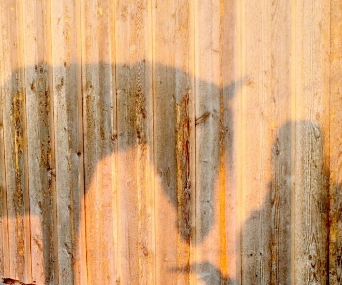 Schattenspielmalik